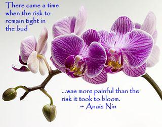 Orchid-Anais-Nin